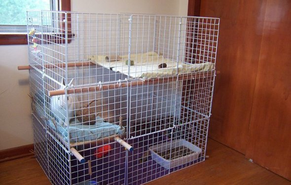 Домашние кролики содержание