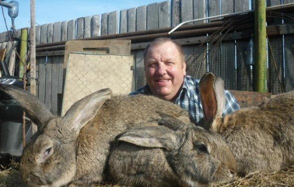 Кролики фландеры фото