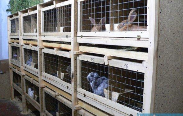 Кролики корма своими руками