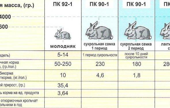Содержание кроликов в