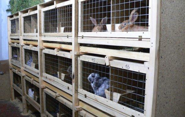 Кролики разведение в домашних