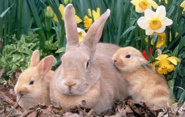 прожить кролики в домашних