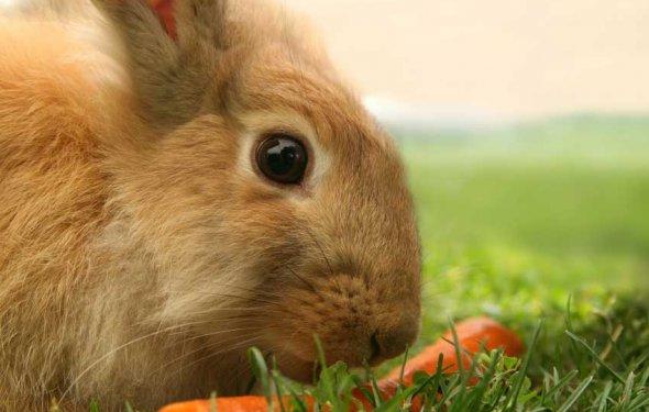 Кролик и морковь