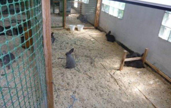 Вольер для кролика может быть