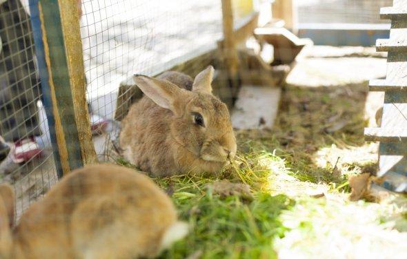 Разведение кроликов в домашних