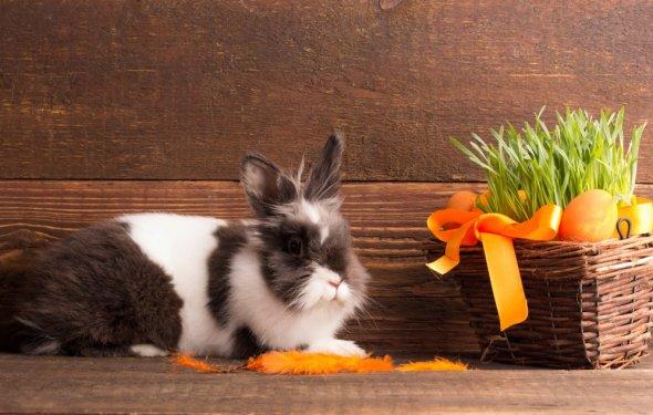 Сколько живут кролики в