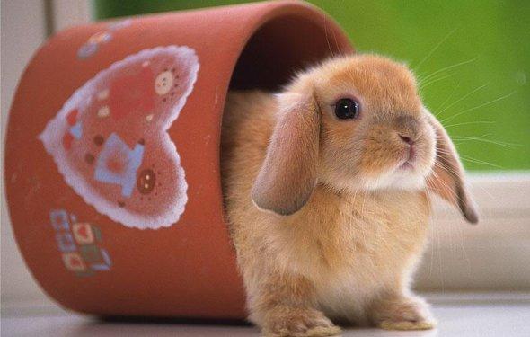Все породы кроликов с