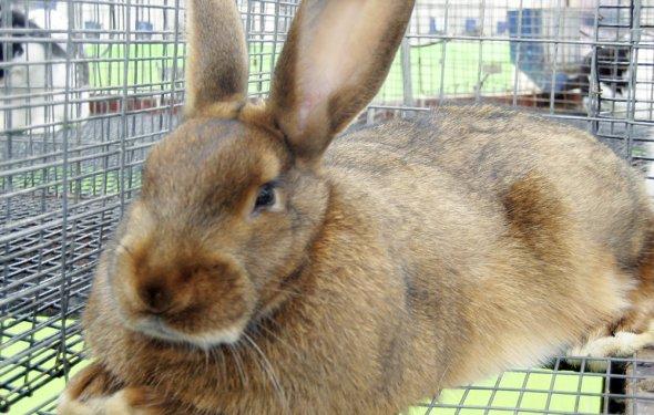 Все виды кроликов фото