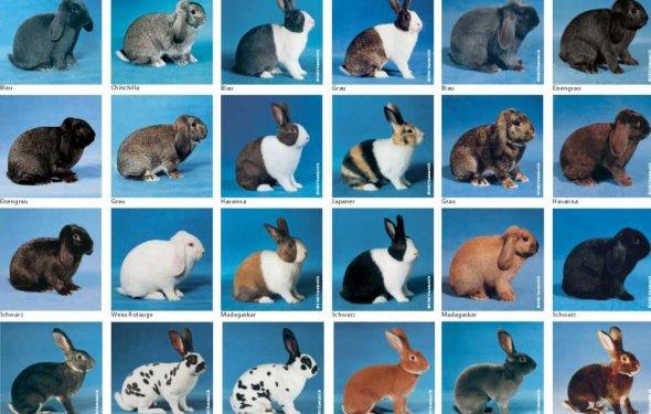 Ямы для кроликов