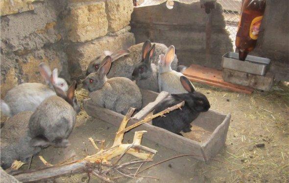 Как разводить кроликов зимой